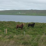 This pair of Icelandic horses seemed quite interested when we stopped.