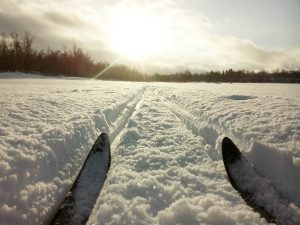 tips of skis in the snow
